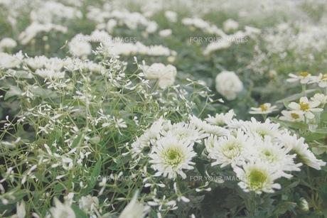花の写真素材 [FYI00545285]