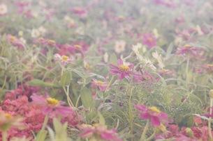 花の写真素材 [FYI00545286]