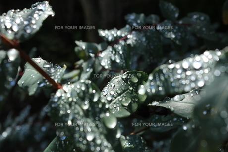 雨上がりの写真素材 [FYI00545383]