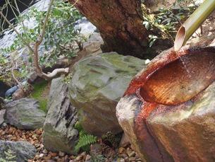 日本庭園の写真素材 [FYI00545424]