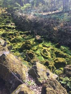 森の中での写真素材 [FYI00545508]