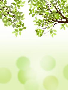 新緑 若葉 エコ 水面のイラスト素材 [FYI00545667]