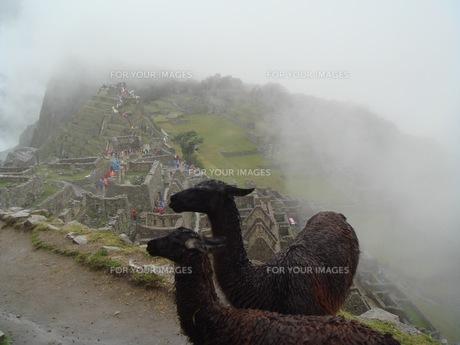 霧のマチュピチュとリャマの写真素材 [FYI00547139]