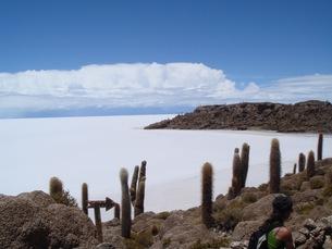 ウユニ塩湖のサボテン島の写真素材 [FYI00547141]