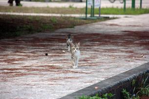兄弟猫の写真素材 [FYI00547158]