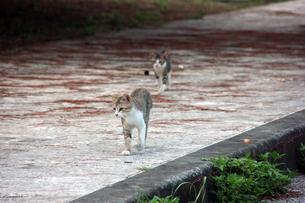 兄弟猫の写真素材 [FYI00547159]