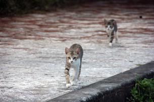 兄弟猫の写真素材 [FYI00547161]