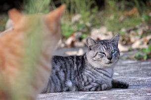 お互い気になる猫の写真素材 [FYI00547177]