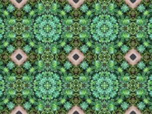 幾何学の多肉植物の写真素材 [FYI00547264]