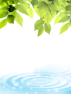 新緑 若葉 水面 エコのイラスト素材 [FYI00547328]