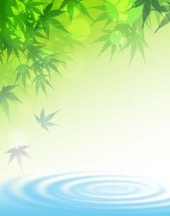 楓 かえで 水面のイラスト素材 [FYI00547329]