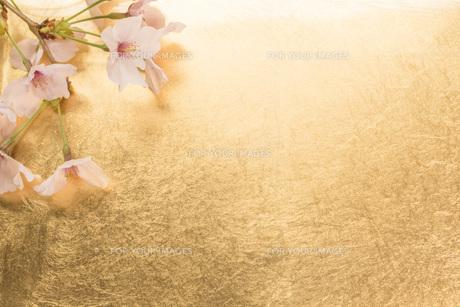 桜と金紙の背景の写真素材 [FYI00547335]