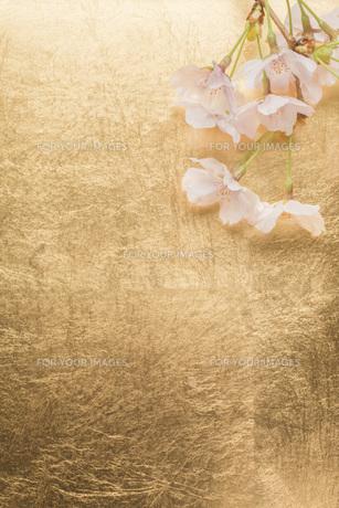 桜と金紙の背景の写真素材 [FYI00547336]