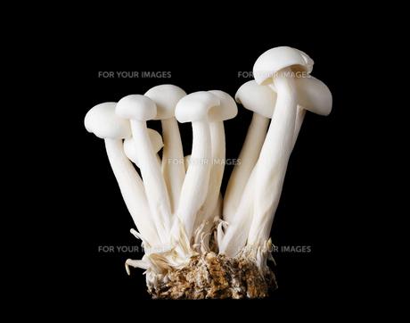 mushroomsの素材 [FYI00548926]