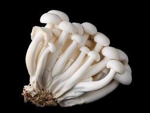 mushroomsの素材 [FYI00548928]