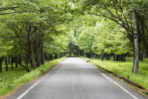 森の道 - 日本の初夏 -の写真素材 [FYI00549550]