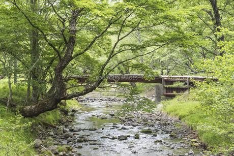 森の木橋と小川 - 日本の初夏 -の写真素材 [FYI00549551]