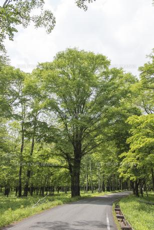 森の道 - 日本の初夏 -の写真素材 [FYI00549552]
