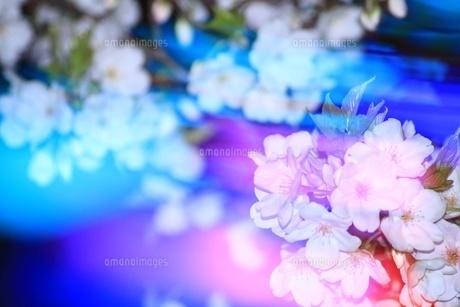 光を着飾った夜桜の写真素材 [FYI00549585]
