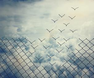 birdsの素材 [FYI00549719]