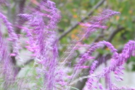 多分、風。の写真素材 [FYI00551815]