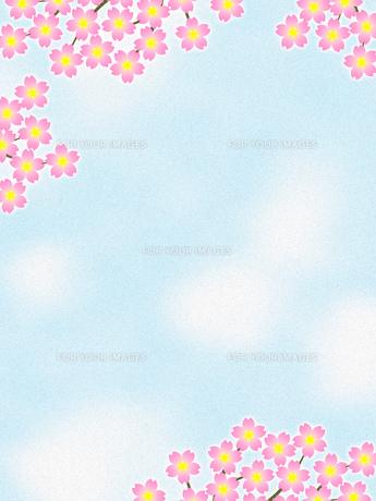 桜の花のイラスト素材 [FYI00551822]