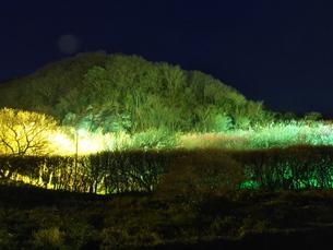 梅まつりのライトアップの写真素材 [FYI00559947]