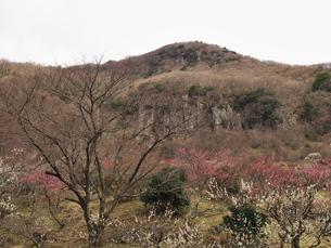 幕山公園 湯河原の写真素材 [FYI00559951]