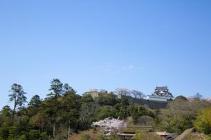 玄宮園から見る春の彦根城の写真素材 [FYI00560131]