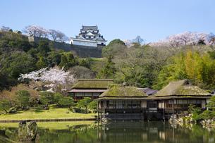玄宮園から見る春の彦根城の写真素材 [FYI00560132]