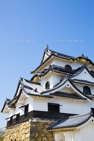 彦根城の写真素材 [FYI00560150]