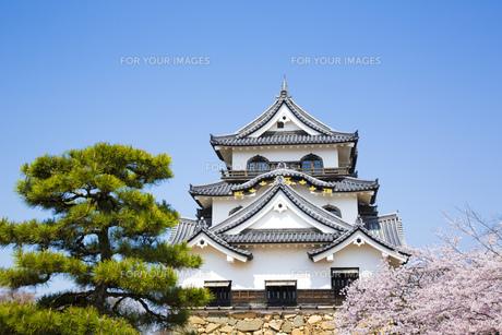 桜咲く彦根城の写真素材 [FYI00560151]