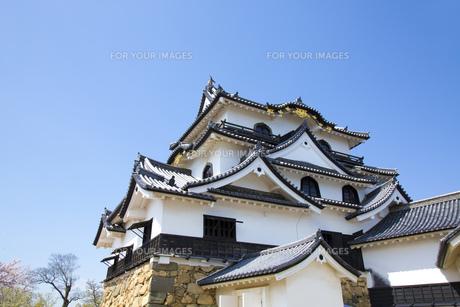 彦根城の写真素材 [FYI00560153]