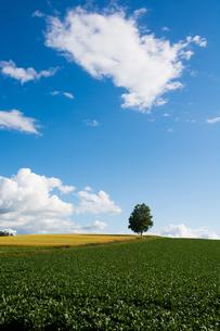 丘の上のシラカバと青空の写真素材 [FYI00560195]