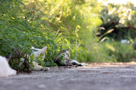 くつろぐ猫の写真素材 [FYI00560345]