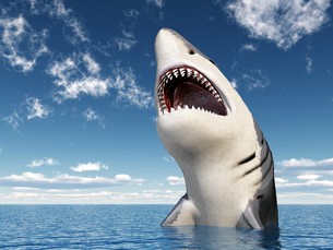 sharkの素材 [FYI00560915]