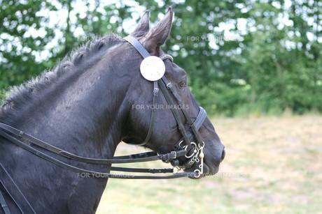 horseの素材 [FYI00564269]