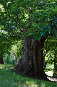 太い根元の木々の写真素材 [FYI00564640]