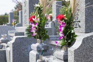 お墓参りの仏花の写真素材 [FYI00564842]