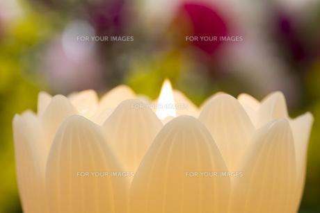 蓮の花の蝋燭の写真素材 [FYI00564860]