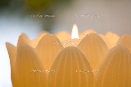 蓮の花の蝋燭の写真素材 [FYI00564861]