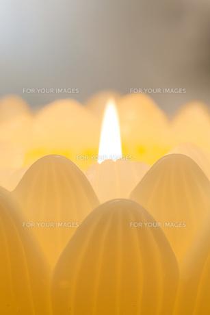 蓮の花の蝋燭の写真素材 [FYI00564863]
