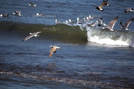 渚のカモメの写真素材 [FYI00564866]