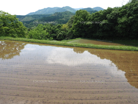 山里の田植え前の写真素材 [FYI00566936]