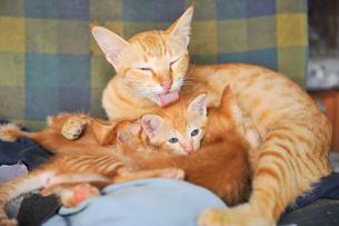 バリ島の野良猫家族の写真素材 [FYI00567016]