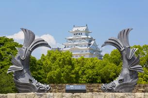 シャチホコと姫路城の写真素材 [FYI00569323]