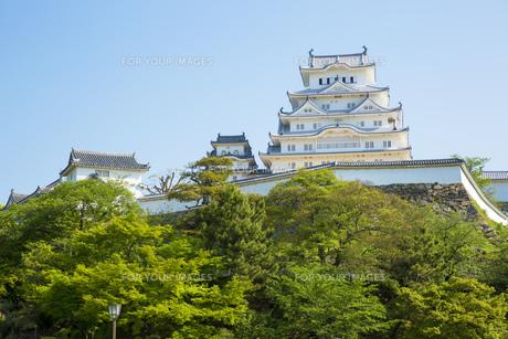 新緑の姫路城の写真素材 [FYI00569324]