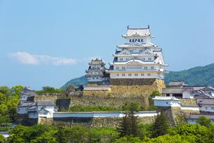 新緑の姫路城の写真素材 [FYI00569328]