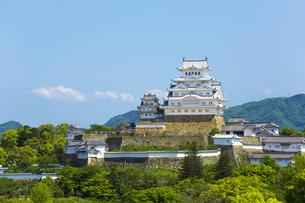 新緑の姫路城の写真素材 [FYI00569329]