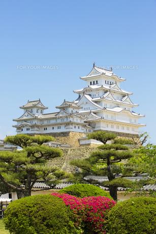 新緑の姫路城の写真素材 [FYI00569335]
